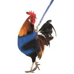 Kippen Harnas