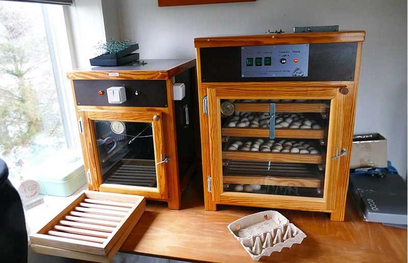 broedmachine cochinkriel