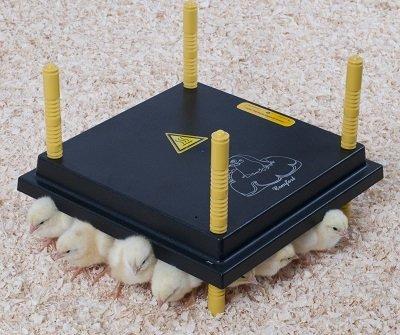 Warmtelplaat voor kuikens
